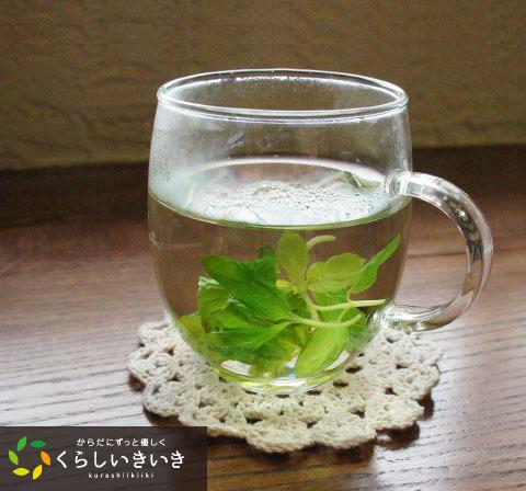 mint_tea.jpg